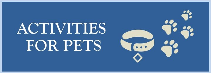 Activities for pets